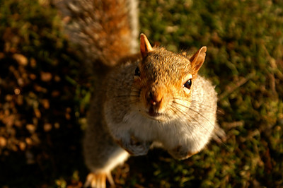 This cute litlle fellow just jumped in front of my camera when I was about to shoot a picture of St. James Park's lake...