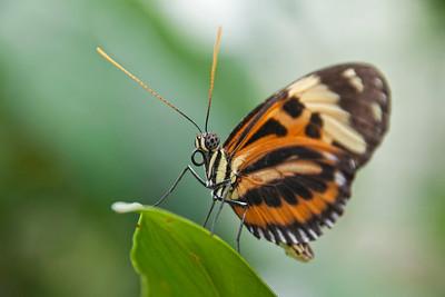 Schmetterlingsausstellung im Botanischen Garten München